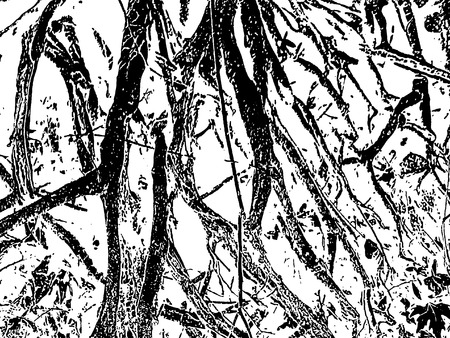 grunge tree: Chaos Tree Roots sketch on white