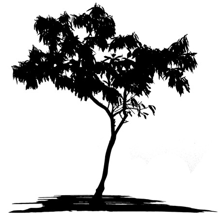 tree outline: Vector drawing of the tree on white background