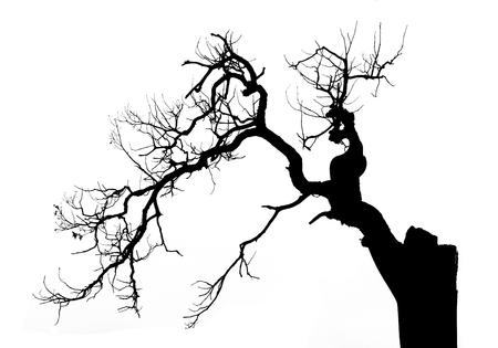 arboles secos: Árbol muerto en el fondo blanco, ilustración vectorial Vectores
