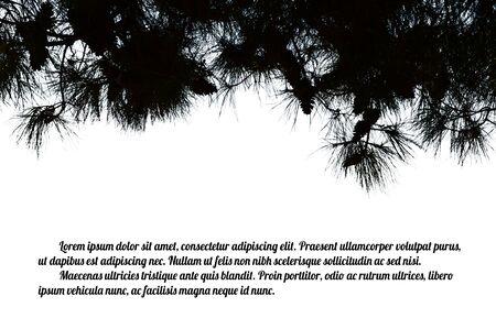 arbol de pino: Rama de árbol de pino en el fondo blanco con el espacio para su texto, ilustración vectorial