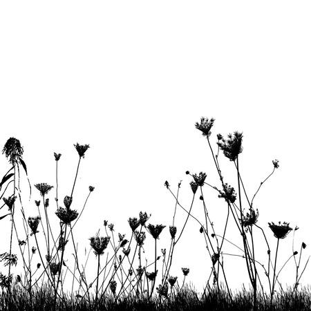 campo de flores: plantas silvestres naturales en la silueta de la hierba en el fondo blanco, ilustración vectorial