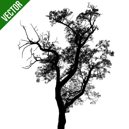 arboles blanco y negro: silueta del árbol negro sobre fondo blanco, ilustración vectorial