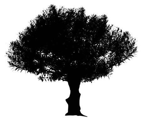 black olive: Black olive tree silhouette isolated on white background, vector illustration