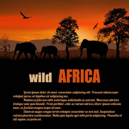 africa sunset: Wild Africa poster. Elephants silhouettes on sunset with space for your text, vector illustration Illustration