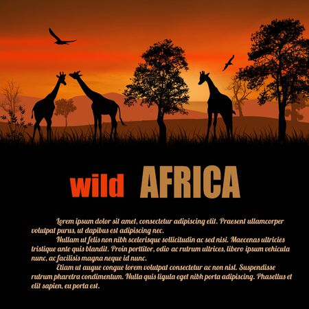 giraffe silhouette: Wild Africa poster. Giraffes silhouettes on sunset with space for your text, vector illustration