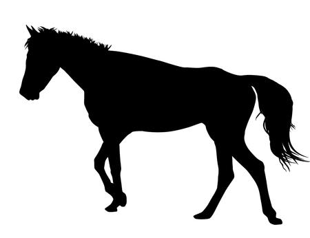 trot: Horse silhouette on white background, vector illustration