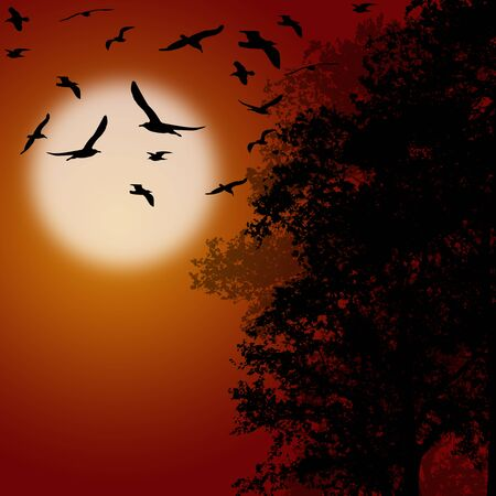 orange sunset: Beautiful forest trees with flying birds on orange sunset, vector illustration