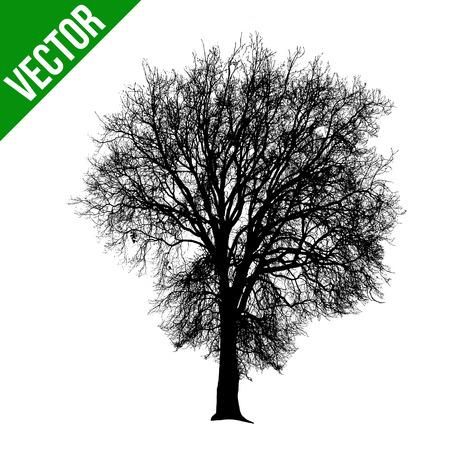 Martwe drzewa sylwetka na białym tle, ilustracji wektorowych