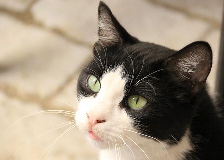 white cats: Beautiful kitten portrait Stock Photo