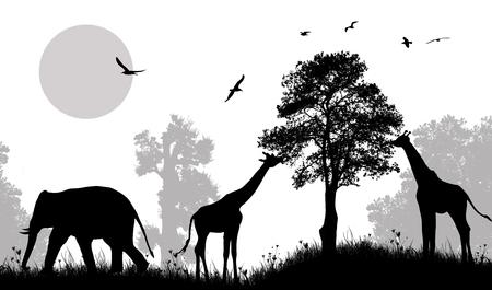 animales safari: Safari wild animals silhouette on black and white, vector illustration.