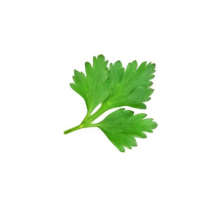 Parsley leaf isolated on white background