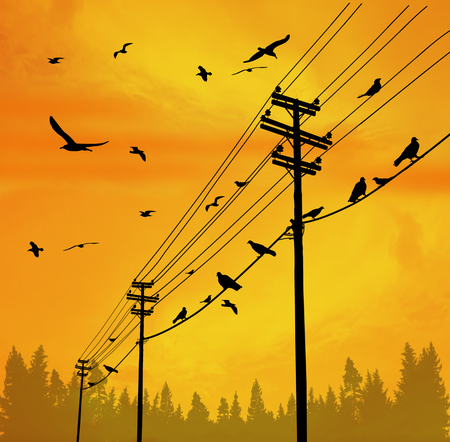 Electricity poles with birds on wire on beautiful sunset, vector illustration