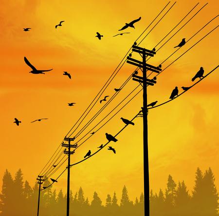 Postes de electricidad con pájaros en el alambre en la hermosa puesta de sol, ilustración vectorial