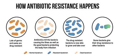 How antibiotic resistance happens diagram, vector illustration (for basic medical education, for clinics & Schools)