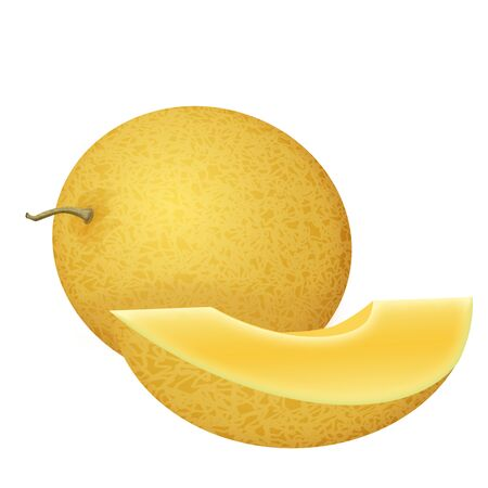 Whole  and slice fresh honeydew melon on white background, vector illustration