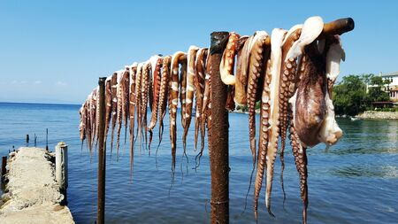 Hanging octopus drying under the sun in Greece