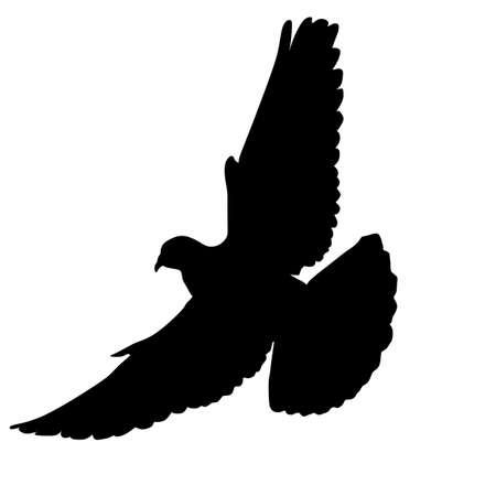 Flying dove on white background, vector illustration