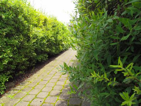 Evergreen bushes and shrubs in sunlight. Modern landscaping. Summer garden or park design.