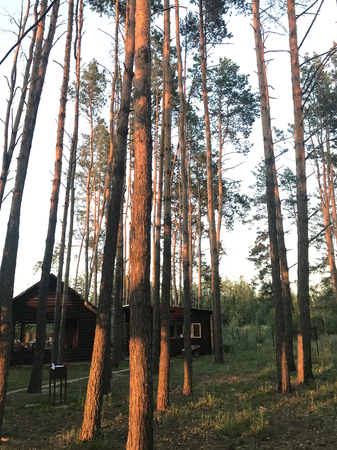 Holiday houses in the forest in summer