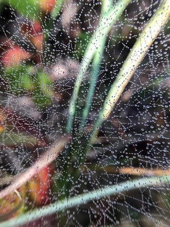 droplets of dew on a cobweb in the grass in the woods