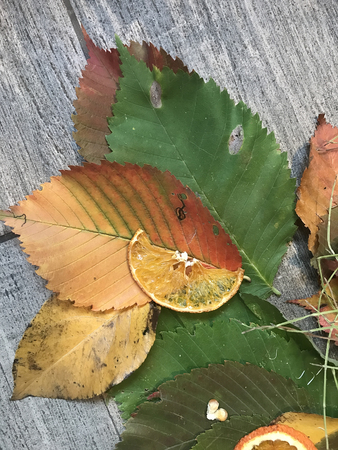 the autumn still life with multi-colored leaves