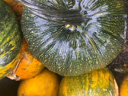 autumn still life with pumpkin, corn and leaves Stock Photo