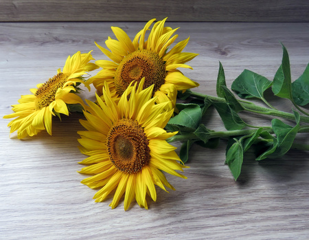 the yellow sunflowers on a wooden background Foto de archivo