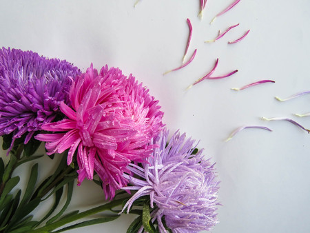 Colorful aster flowers forming a frame on a background, minimal concept, top view, copy space for your text Scattered petals Group Objects