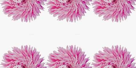 Colorful aster flowers forming a frame on a background, minimal concept, top view, copy space for your text Group Objects pattern