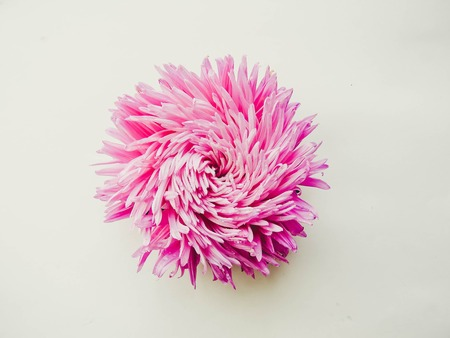 Pink aster flower on a background, minimal concept, top view, copy space for your text Group Objects
