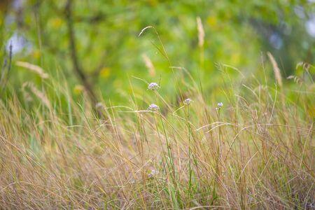 Grass. Fresh green sammer grass closeup. Soft Focus. Abstract Nature Background