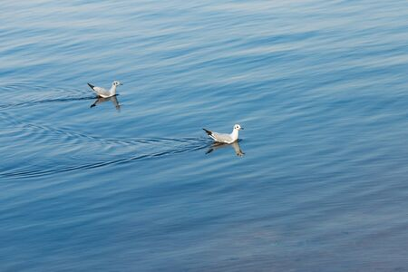 Seagulls float on a blue river on a day