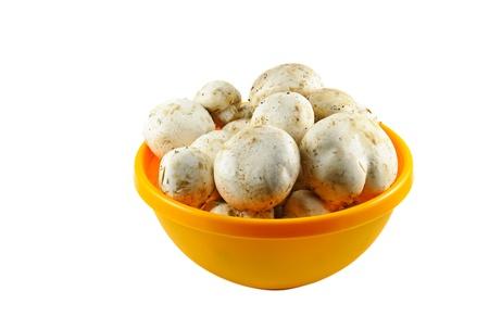 champignons: Champignons