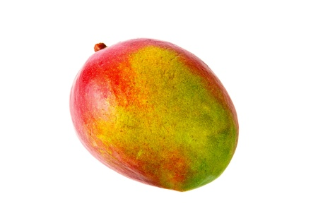 mango fruta: Fruto de mango fresco