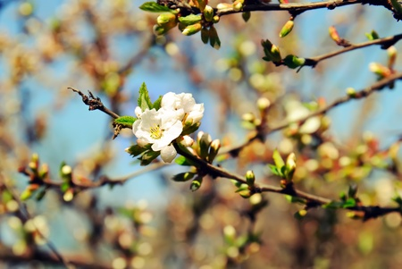 briar bush: Young dog rose flower Stock Photo