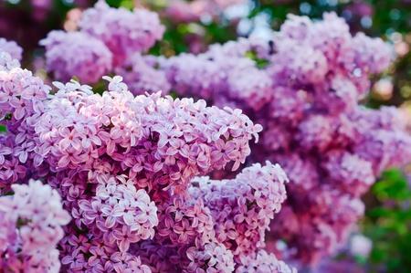 Tak van lila bloemen Stockfoto