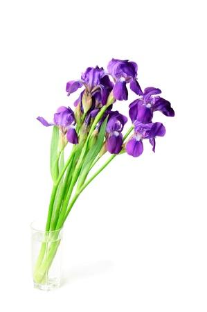 Iris flower Stock Photo - 9884116