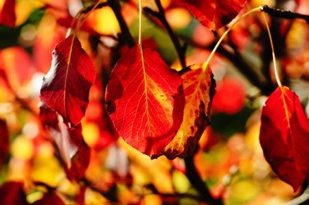 Autumn seasonal wallpaper Stock Photo - 10103611