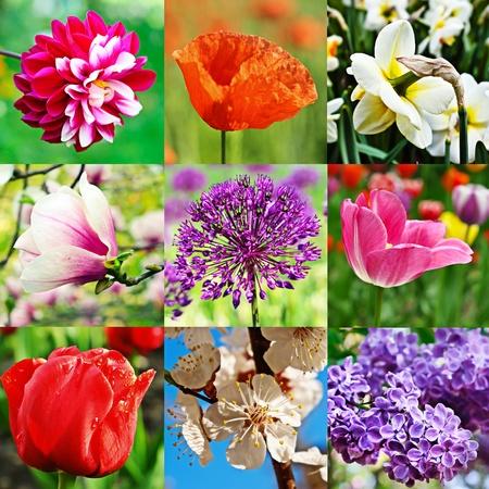 Flower collage photo