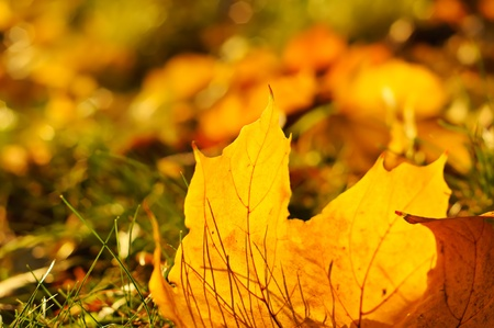 Autumn background Stock Photo - 10262908