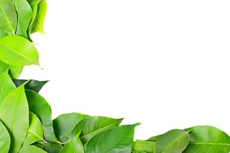 crecimiento planta: Marco de hojas Foto de archivo