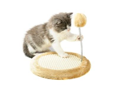 Kitten spelen met speelgoed Stockfoto