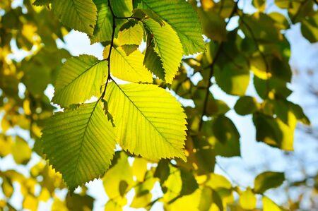 Autumn seasonal wallpaper Stock Photo - 10549616