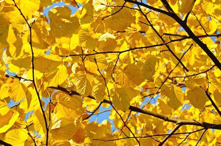 Autumn tree branch photo