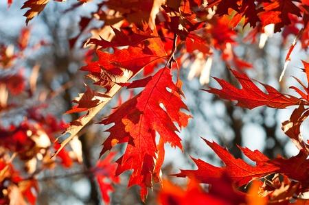 Autumn seasonal wallpaper Stock Photo - 10688368