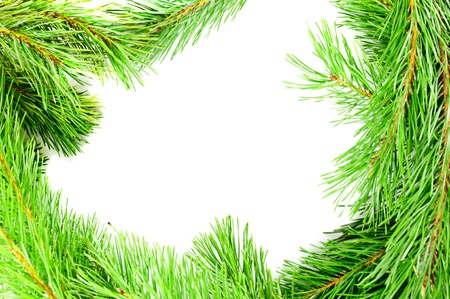 Frame from the pine branches photo