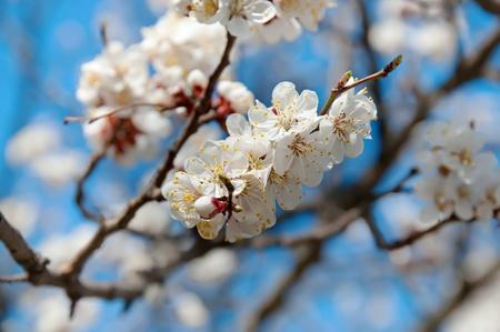 Primavera de fondo Foto de archivo - 11413517