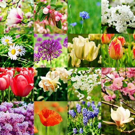 Flower collage photo