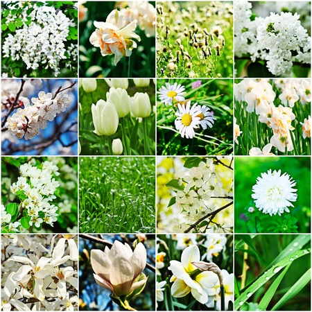 White flower collage photo