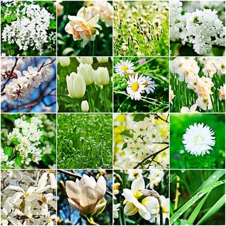 White flower collage photo